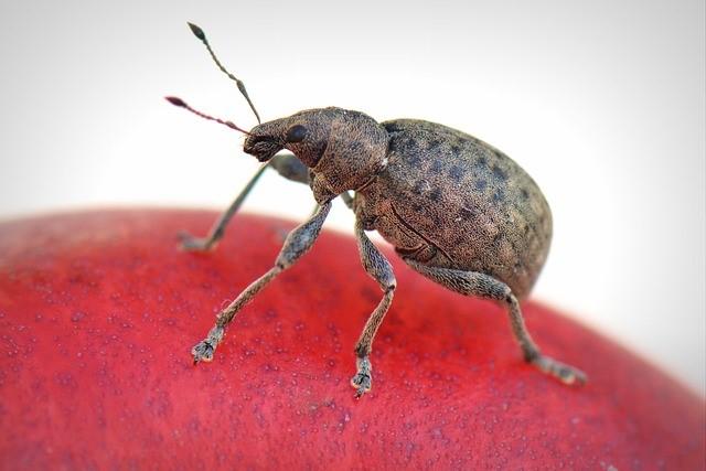 Pest management alma center wisconsin q pest control products pest control around alma center wisconsin solutioingenieria Gallery